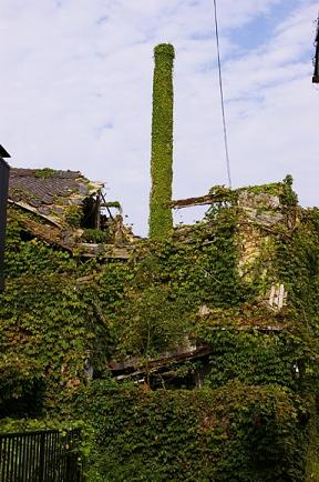 植物な工場.JPG