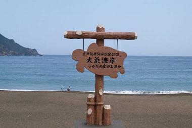 日和佐海岸海亀.jpg