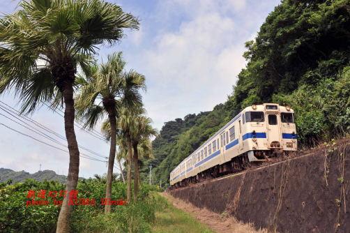 指宿枕崎線のキハ47とシュロ