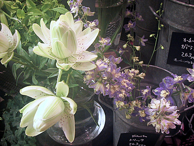 八重咲きユリ「ノーブル」、デルフィニウム「トリック」