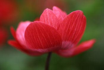 ラストの赤い花.jpg