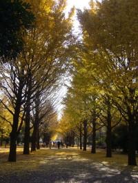 光が丘公園 秋