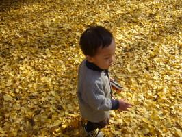 光が丘公園 秋3