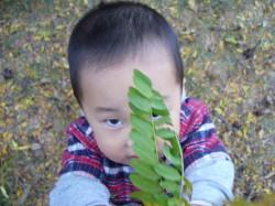 葉っぱ拾い