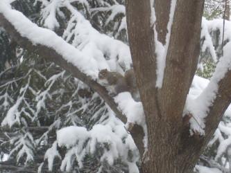 snow-りす