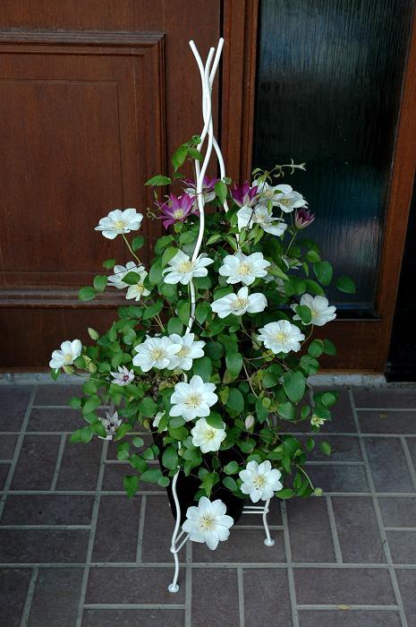鉢バラに便利なオベリスク! Garden★garden★ガーデン 楽天ブログ