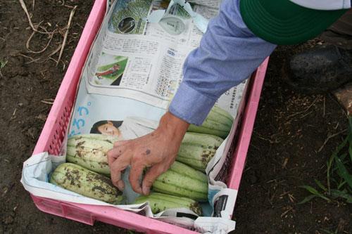 収穫うり.jpg
