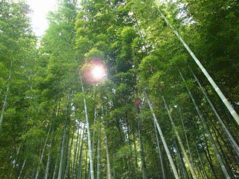 20090905_京都0013.JPG