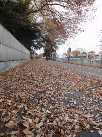 2010-11-28_晩秋0001.JPG