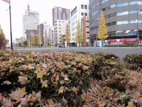 2010-11-28_晩秋0003.JPG