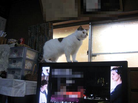 TVの上まで…