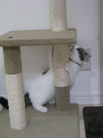 タワーで遊ぶ猫1
