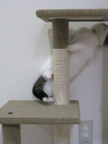 タワーで遊ぶ猫2