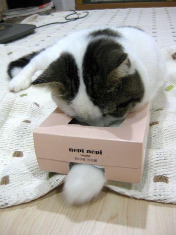 箱遊び 2