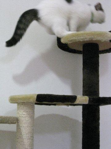 タワーで遊ぶ猫3