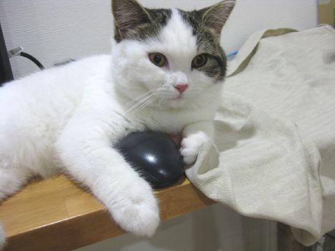 マウスはボクのだ!