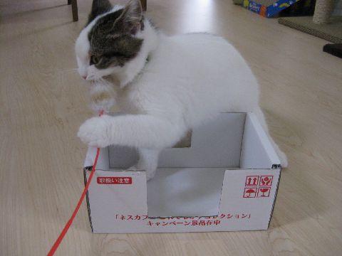 箱とじゃらし1