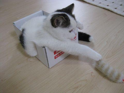 箱とじゃらし2