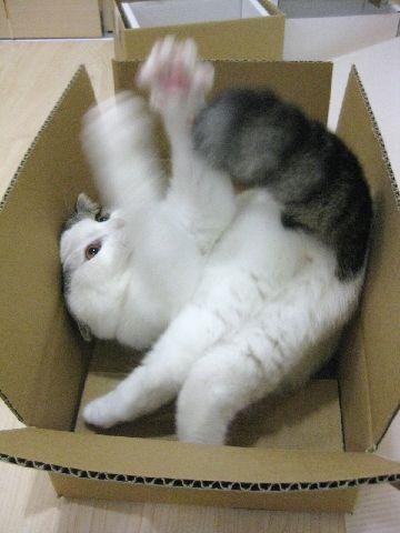 箱の中でしっぽ遊び