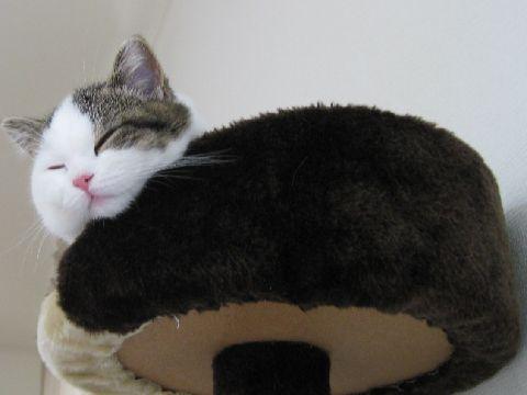タワーの上で寝る猫