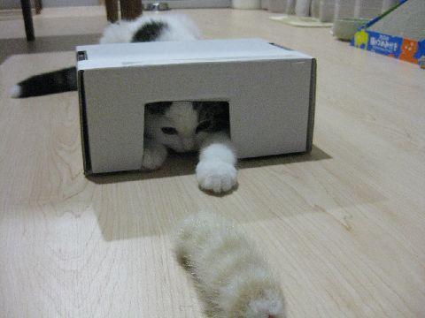 箱とじゃらし3
