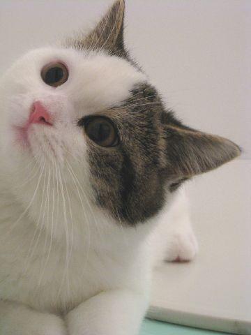 見上げるネコ2