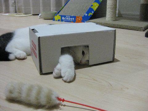 箱とじゃらし4