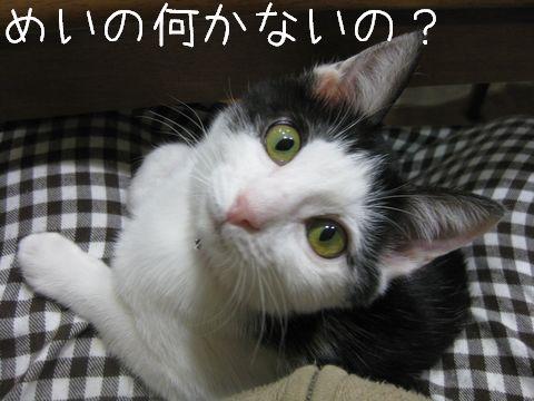 何か欲しい!