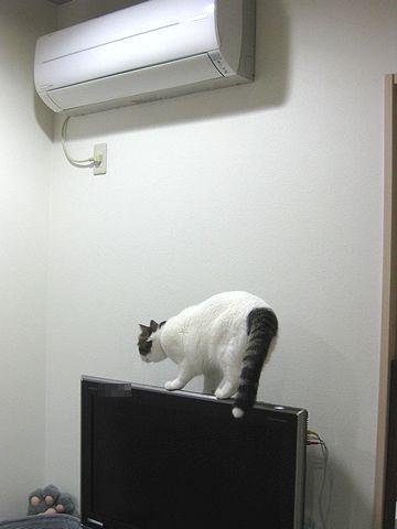 TVの上うろうろ
