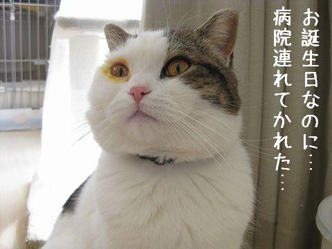 目の周りも黄色