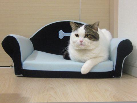 もち王子ベッド