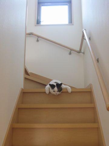 階段で垂れ~