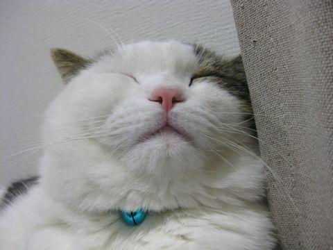 気持ち良さそうな寝顔