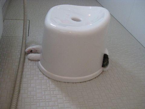 風呂いすと猫1