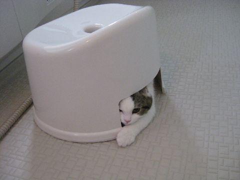 風呂いすと猫2