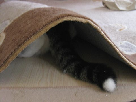 お隠れに・・・