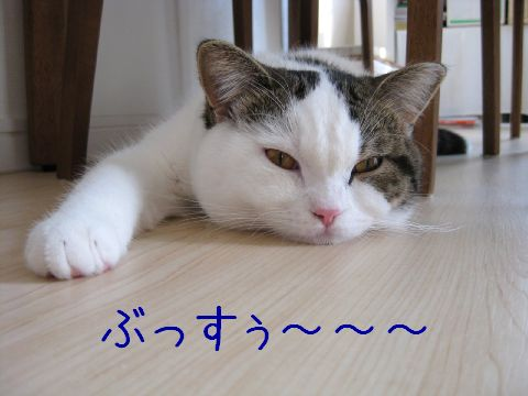 ぶすくれ猫