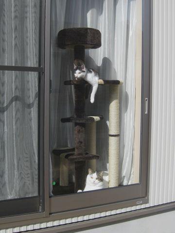 窓際に移動