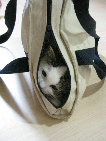 隠れてじーーー