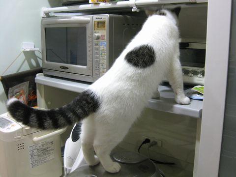 炊飯器乗ってる・・・