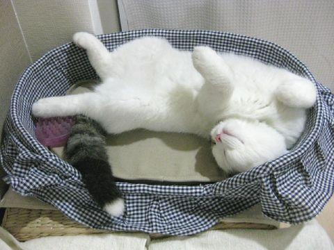 ベッドで寝るもち2