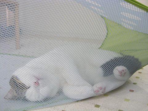 網につかまった猫