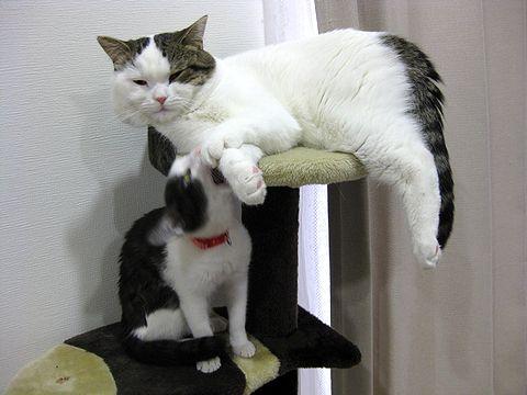 めいも座りたい!