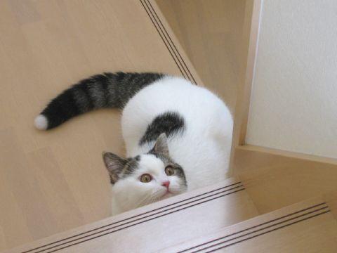 階段から見上げる猫