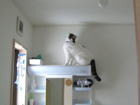 天井に何かある?!