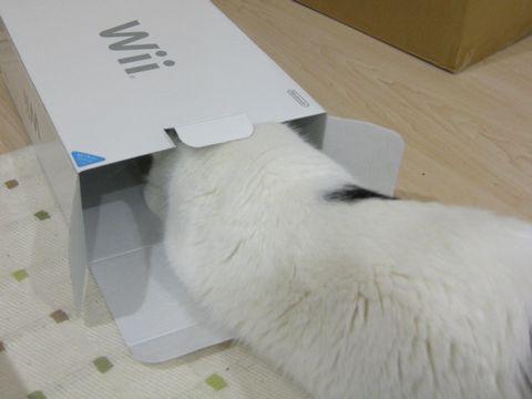 箱もらおうかな