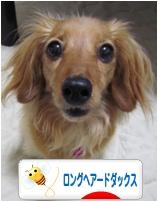 にほんブログ村.jpg