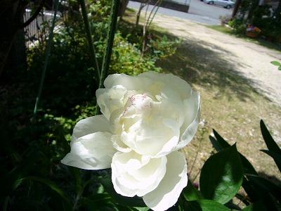 201105 076.jpg