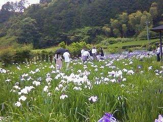 小国神社 菖蒲園にて.jpg