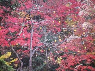 2008年11月29日京都 018.jpg